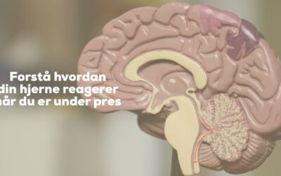 En guide til din hjerne
